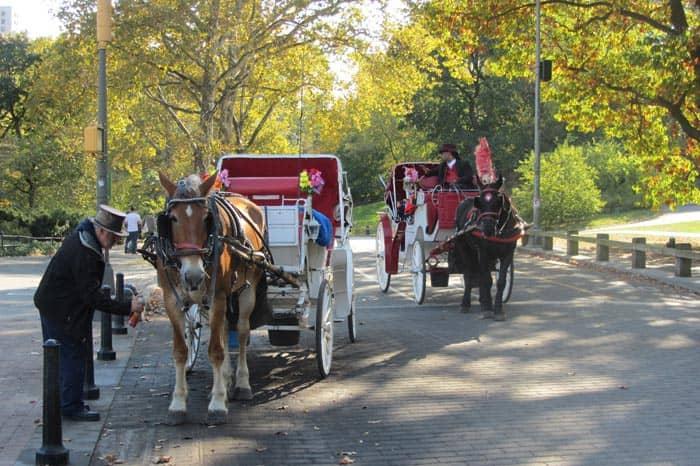 New York, giro in carrozza Central Park
