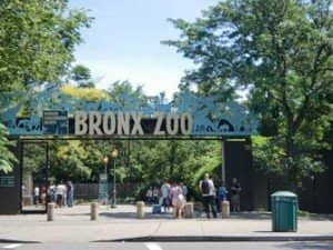 Bronx Zoo A New York