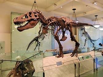 Museo americano di storia naturale a New York - Dinosauro
