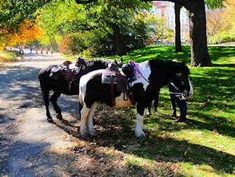 Andare a cavallo in Central Park - Cavalli