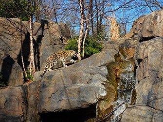 Biglietti Central Park Zoo - Leopardo delle nevi