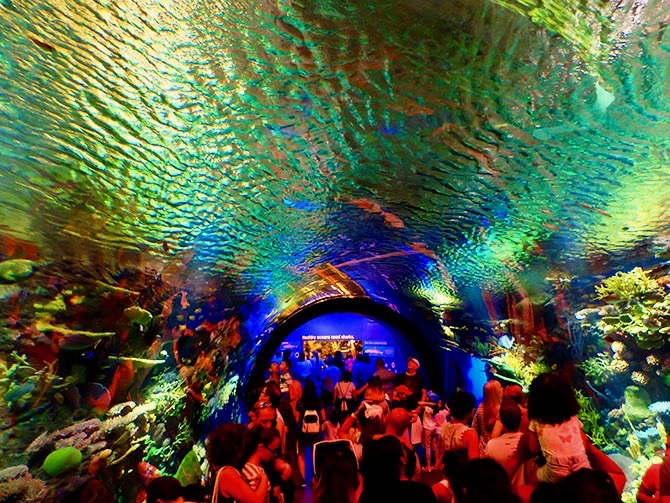 New York Aquarium - Barriera corallina